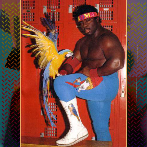 shad-kokobware-artwork